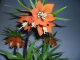 Easter flower fritillaria imperialis