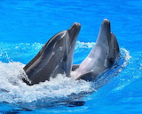 Dancing Dolphins...