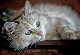 Blue Eyes, Pink Nose