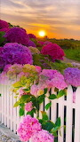 white picket fence floral,