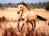 ❤️Beautiful Stallion...