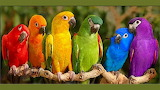 ^ Colorful parrots