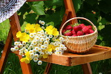 Flowers and basket of berries
