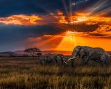 sunset, savanna, elephants