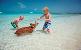 Children play with piglet in the Bahamas sea
