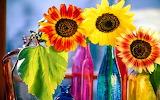 Sunflowers variety...