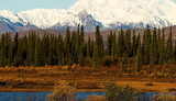 Places - Alaska - Cantwell - Autumn