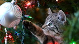 Pet-proof-your-christmas-tree