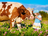 little girl with cow