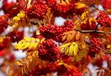 ☺♥ Autumn colors...