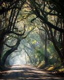 Rural road South Carolina