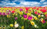 Весеннее поле цветов