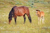 Mare and foal at the McCullough Peaks wild horse range in Wyomin