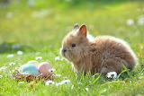 Easter, bunny, animal, eggs, basket, meadow, grass, daisies