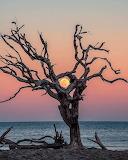 Moon through a tree