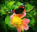 Flower, Butterfy