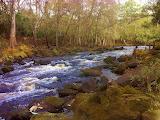 #The Aucilla River