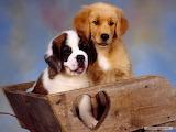 Puppies-dog
