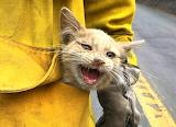 California Fires ~ Rescued Cat