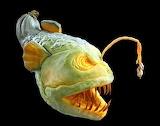 Squash-Monster-pumpkin-carving-halloween