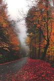 Landscape tumblr simply-beautiful fall