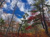 Autumn forest trees landscape