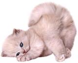 ^ Cute kitten