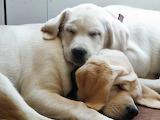Puppies-2-334