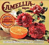 Camellia Oranges
