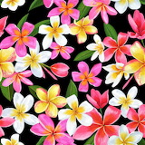 #Beautiful Flowers