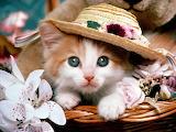 Kitten hat