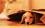#Playing Hide and Seek