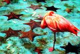 FlamingoAndSeastars