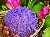 Flowers @ Pixabay...