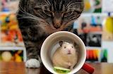Cats Hamsters Mug 569284 1280x839