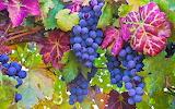 colorful vine