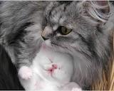 Cute-baby-kittens-8453-hd-wallpapers