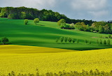Fields in may by dieffi-d665ujp