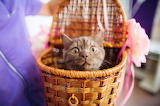 Where Are We Going In This Basket?