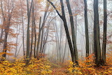 Evgeni Dinev Photography Fairy Forest