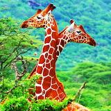 Tall Love...
