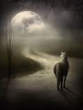 Moonlit horse