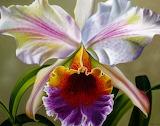 ^ Orchid art