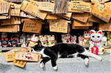 Real cat with cat statues cat temple Japan