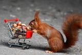 Esquirol - Squirrel
