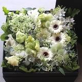 Una scatola di gerbere bianche