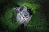 Dog hiding behind ferns