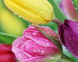 Spring Flowers @ Pinterest...