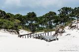 Pine dunes