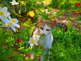 Kitty in the garden